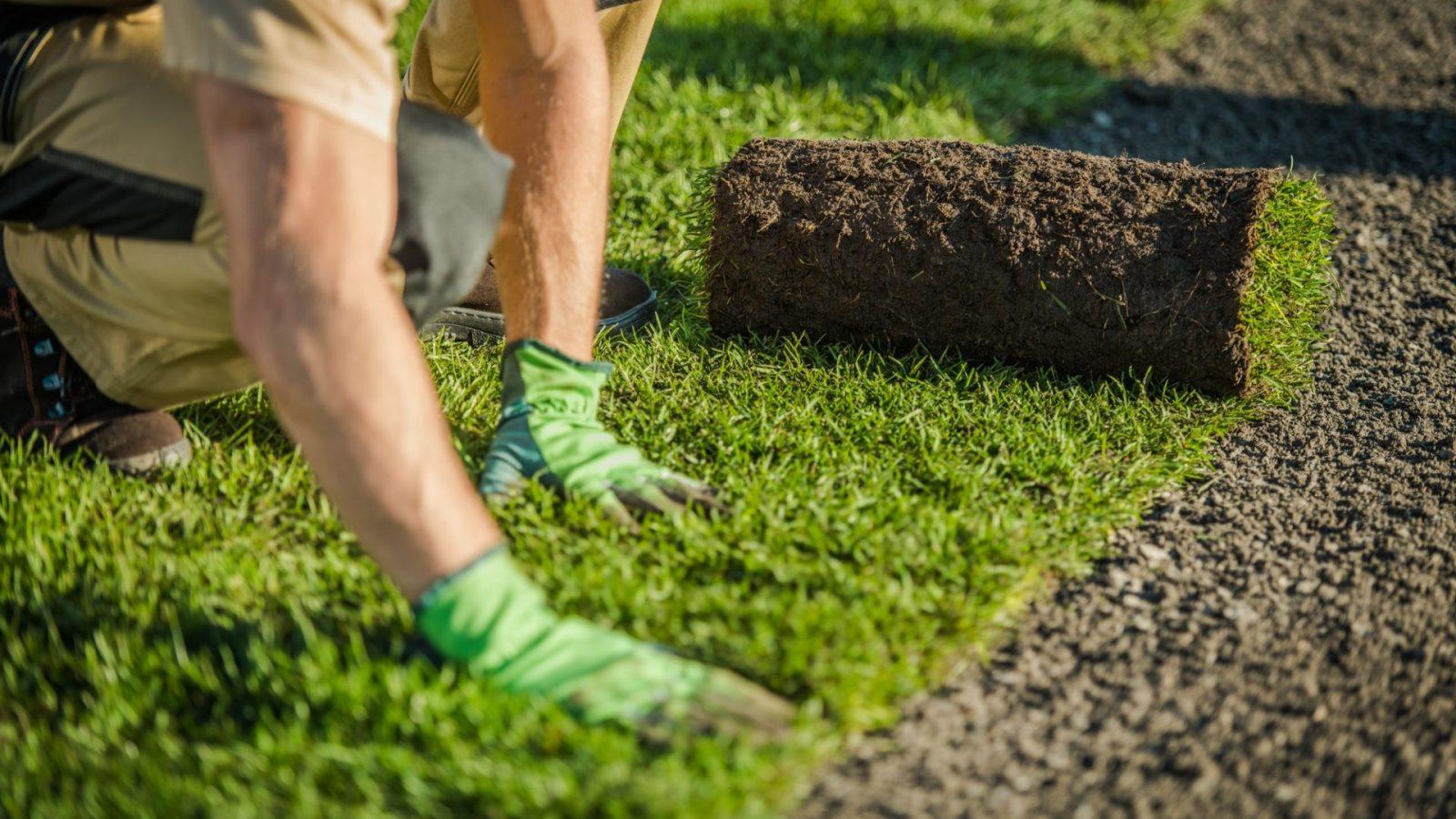 Rollrasen, bester Rollrasen 2021, Premium Rollrasen für deinen Garten, Rollrasen Köln